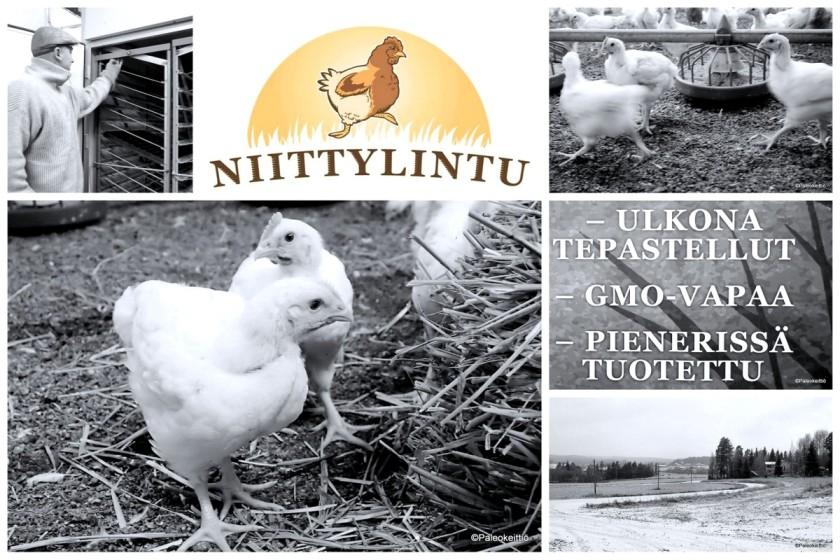 Missä onnellinen kana pissii? | paleokeittio.fi
