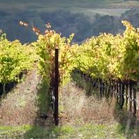 Viinin salaisuus - Tiedätkö, mitä viinisi sisältää?